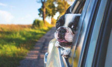 Summer Travel with the Dog – Anxiety and Carsickness