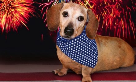 Fourth of July Safety for Dogs