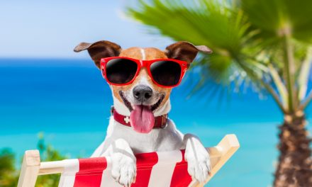 Caring for Your Dog During the Dog Days of Summer