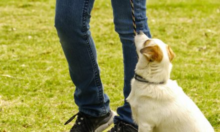 Puppy Talk: Teaching a Dog Good Habits