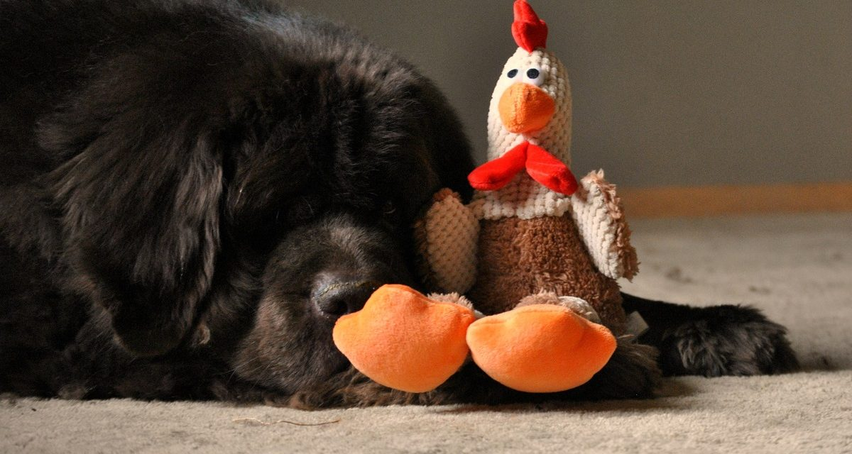 Puppy Talk…Your Dog and Thanksgiving
