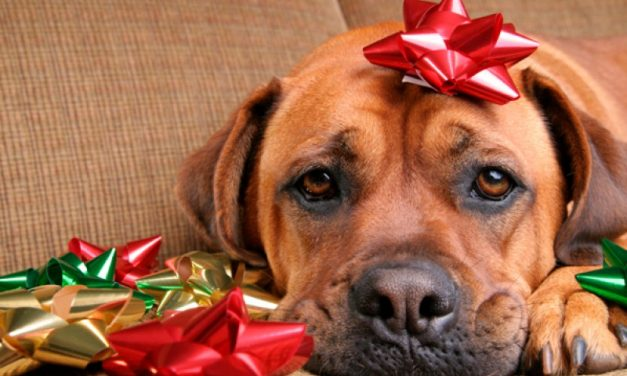 Puppy Talk…Keeping Your Pet Safe For the Holiday